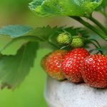 Space-saving edible landscaping tips