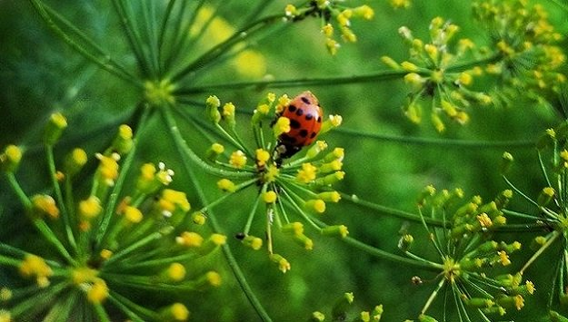 Sustainable pest prevention with companion planting