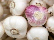 Fall garlic
