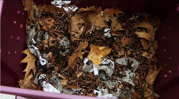Indoor composting bin
