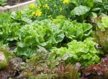Maximizing your garden space