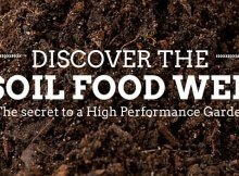 Super soil food web