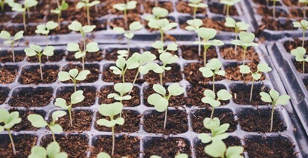 Seed-starting supplies