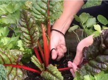 How much food can you grow in a small garden bed