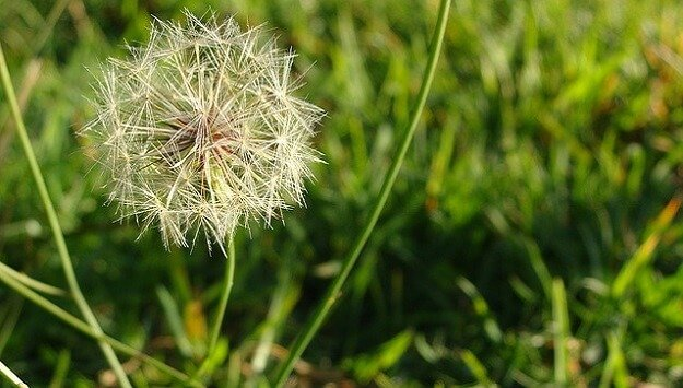 Time-saving tips for weeds