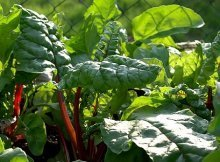 Cool-weather crops for fall gardens