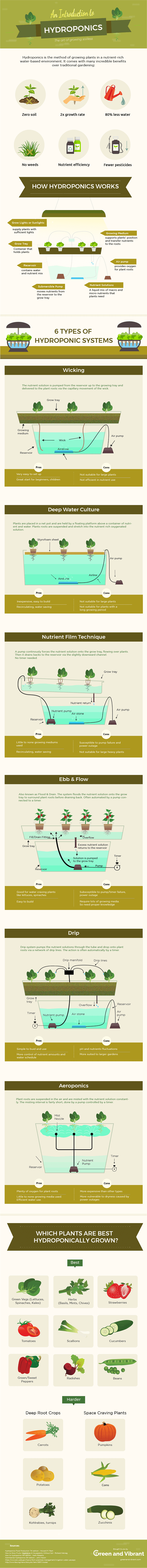 Introduction to hydroponics (graphic)