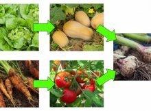 Space-maximizing tips for a bigger garden harvest