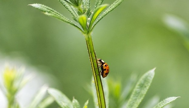 How to attract beneficial predator insects to your garden