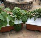 EarthBox Organic Garden Kit Planter Container