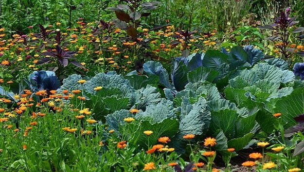 Naturally pest-repellant plants for the garden