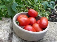 How to extend your summer garden harvest