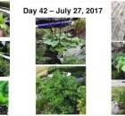 How much salad can you grow in a small garden