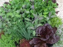 Herb Garden design ideas video