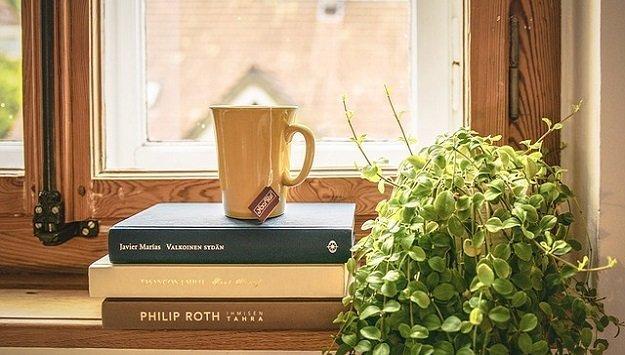 Tips for growing an indoor garden