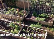 Growing in containers vs raised bed gardening
