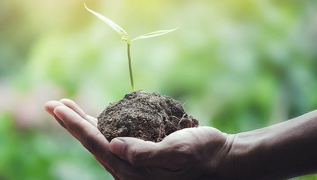 Go green & save green in your garden