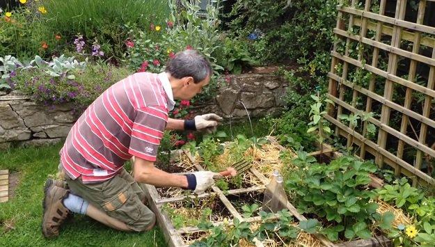 Tips for gardening in lockdown