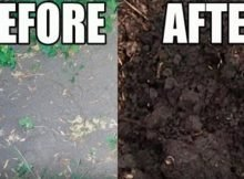Easy way to improve poor soil