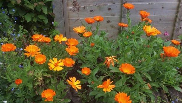 Growing wildflowers for bees & butterflies
