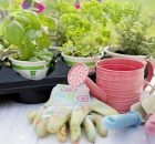 Small garden tools & accessories