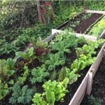 Dealing with pests and diseases in the garden