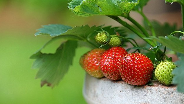 Space-saving edible landscaping tips