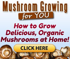 Grow Your own Organic Mushrooms