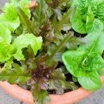 How to grow an edible container garden