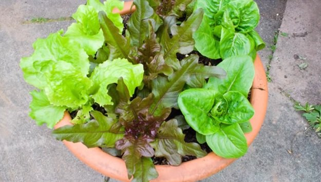 How to grow an edible container garden