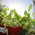 How to get started growing indoors
