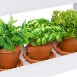 Best indoor garden kits
