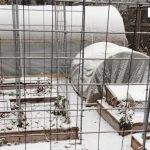 Winter gardening success in unheated hoop houses