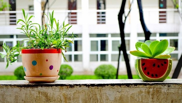 Tips for growing healthy plants indoors