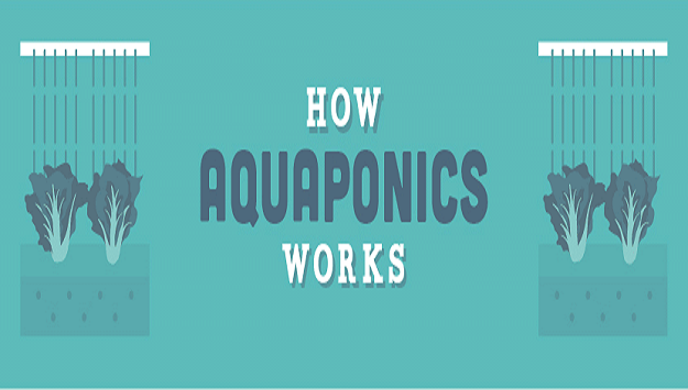 How aquaponic systems work