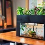 Best Aquaponics Kits for home gardeners
