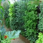 Vertical vegetable gardening tips