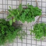 Vertical garden tips