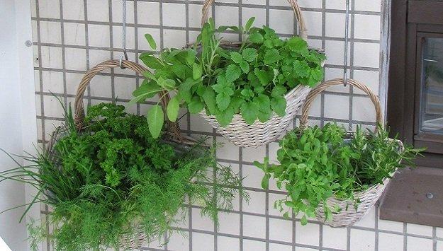 Vertical garden tips