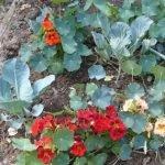 5 vegetable garden planning tips