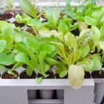 Tips for sowing seeds indoors