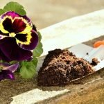 Best organic soils for container gardening