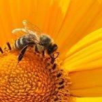 Best flowers for a bee-friendly garden