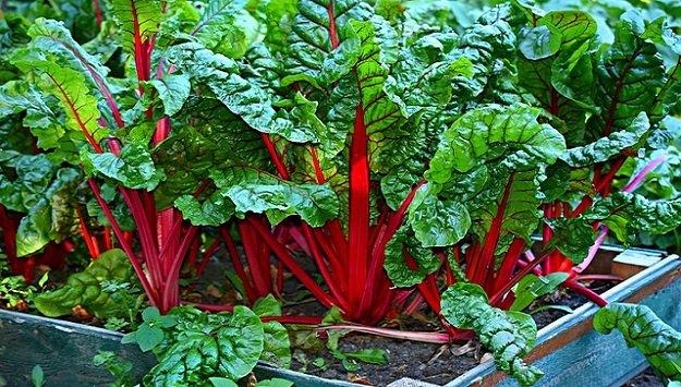 Small garden vegetables ideas
