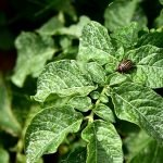 Natural pesticides & organic pest control