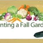 Planting a fall garden