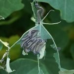 How to deal with common garden pests