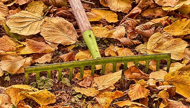 Fall gardening tips for better soil
